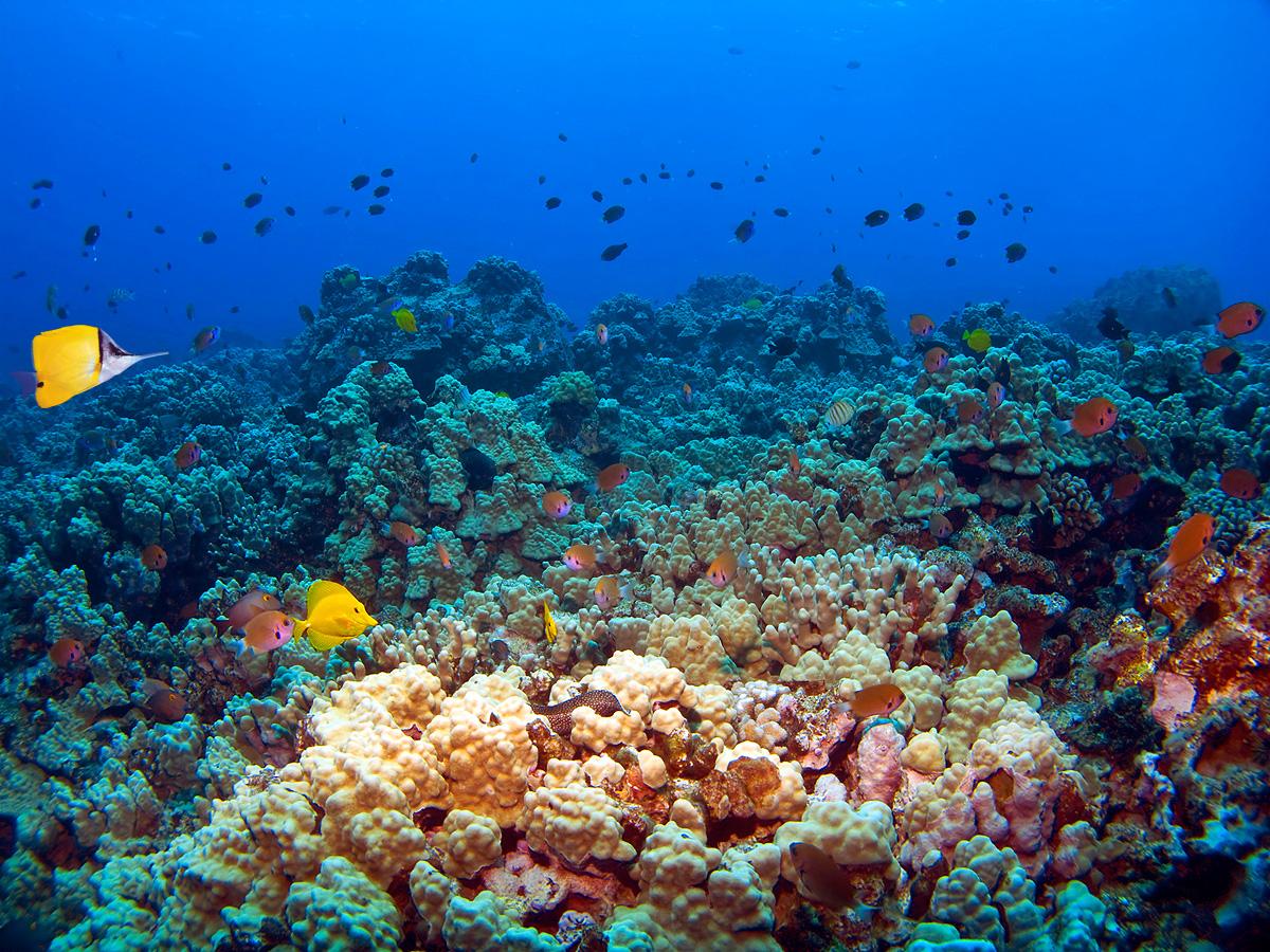 Molokini Overview | Maui Scuba Dive Sites from B&B Scuba